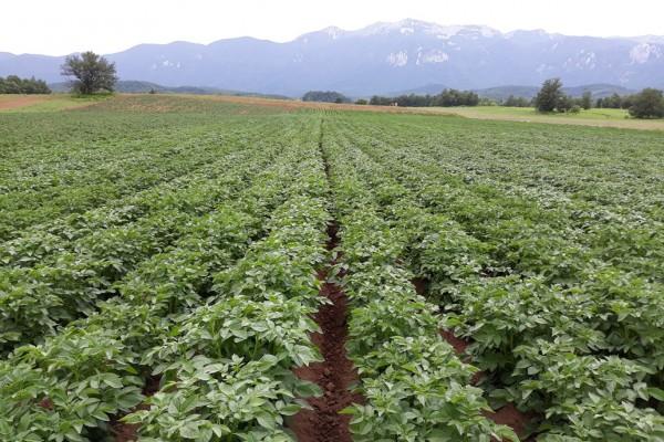 Specijaliziranim gnojivima do većih prinosa
